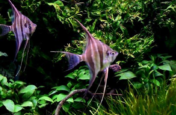 La alimentaci n de los peces del acuario mundo acuario for Alimentacion para peces de acuario